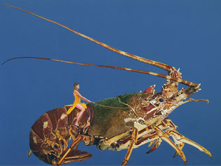 Self Portrait on Crayfish